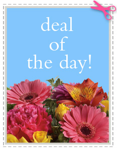 Deal of the Day in Clarksville TN, Hilldale Florist
